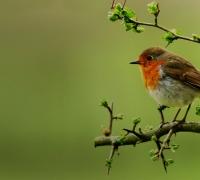 Vogelschutzfolie
